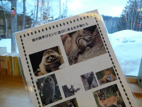 【森の旅亭びえい】庭に遊びに来る動物たちの案内