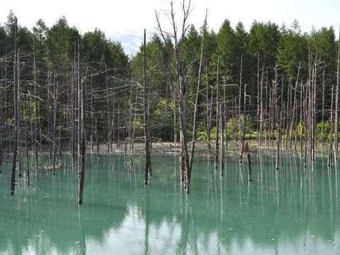 【森の旅亭びえい】神秘的な「青い池」