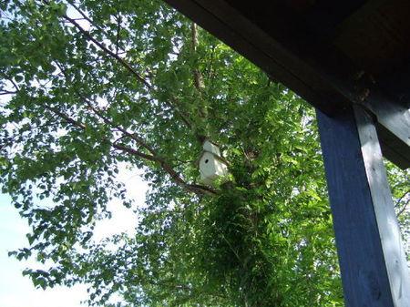 【ルヒエル】木の上には小鳥の巣箱