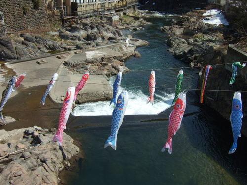 定山渓「渓流鯉のぼり」