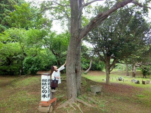縁結びの大木