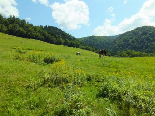放牧されている馬たち