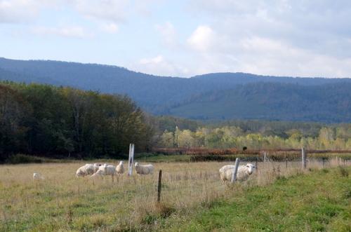 「ファームイン・トント」テラス越しに広がる、羊たちと秋色の風景