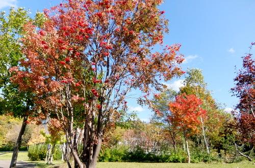 「きたいっしょモニターツアー」青空に映える紅葉が美しい