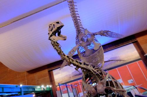 「エコミュージアムセンター」クビナガリュウの化石