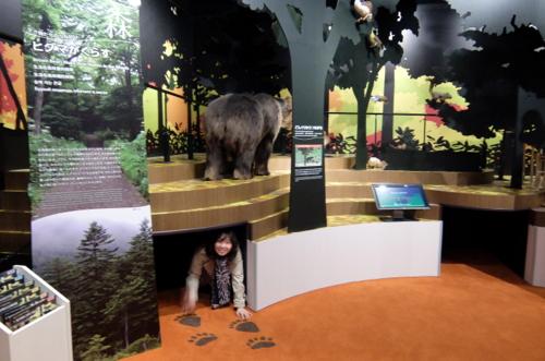 「北海道博物館~森のちゃれんが」ヒグマと人との関わりを展示するコーナー