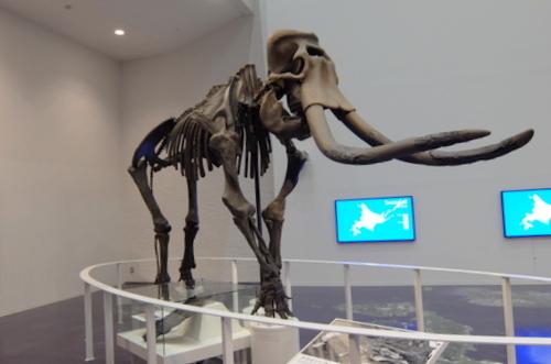 「北海道博物館~森のちゃれんが」マンモス象の向かいにはナウマン象