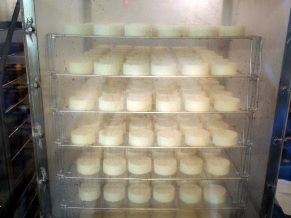 チーズが出来上がるまでの工程を見学できる