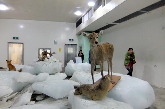 入場無料の宗谷岬の流氷館館内