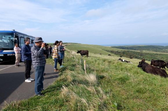 目の前に放牧された牛が寝そべる宗谷丘陵