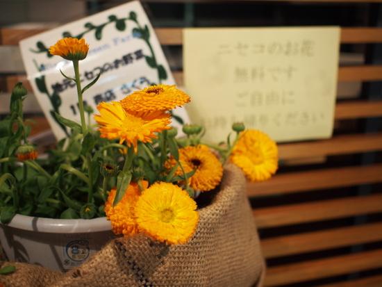 売店には自由に持ち帰ることができる花があった