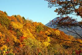 アンヌプリ山頂の紅葉