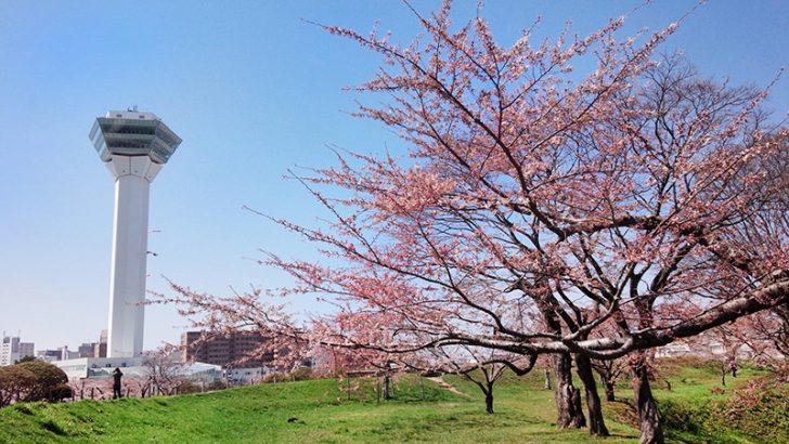 五稜郭タワーと満開の桜