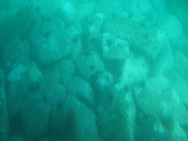海底はビッシリ、ウニ