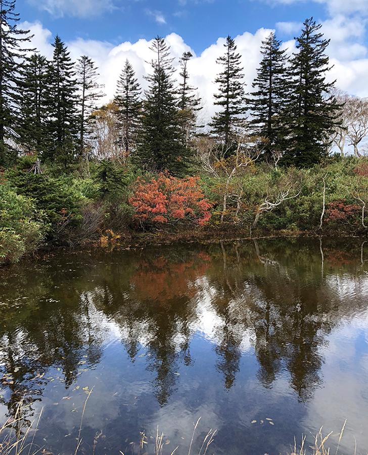 途中の小さめの池沼で、美しいところ発見!