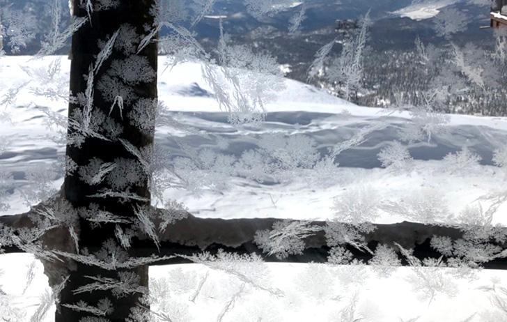 美しい霜の華です