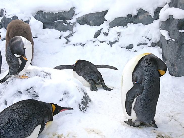 うつぶせになっているペンギン