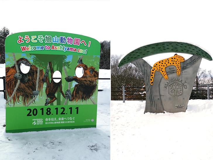 旭山動物園/撮影スポット