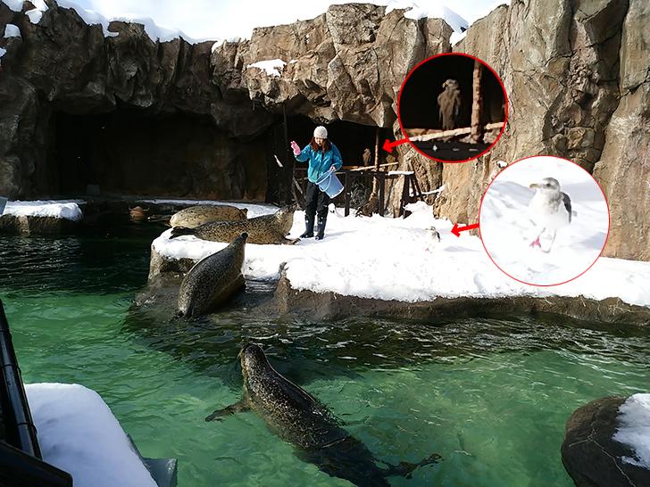 旭山動物園/アザラシとオジロワシとオオセグロカモメ
