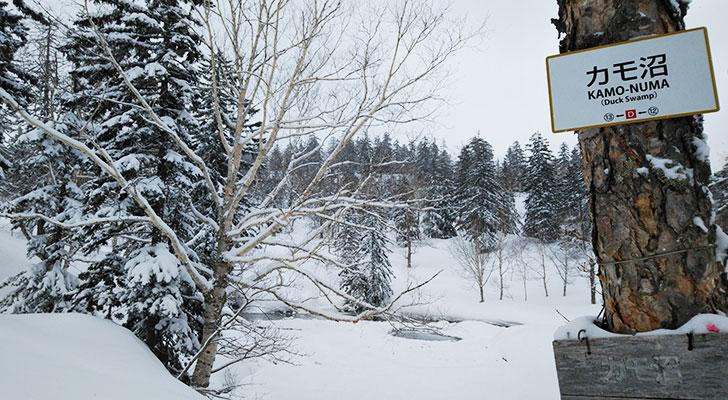 クロスカントリーのスキーコースになっているカモ沼
