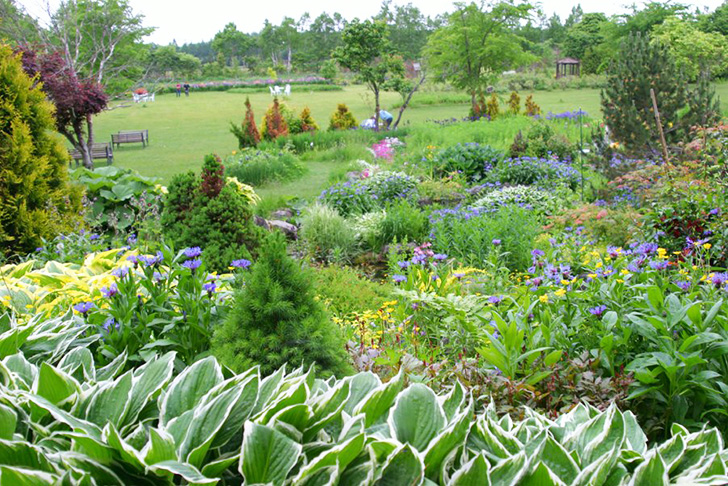 さまざまな花が咲く紫竹ガーデンの花畑
