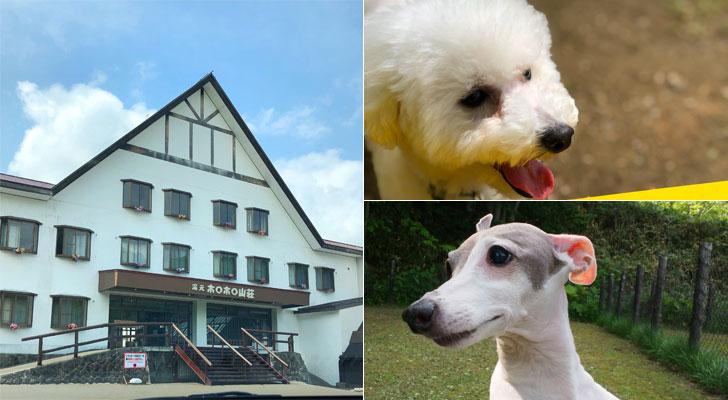 ホロホロ山荘外観と犬2匹
