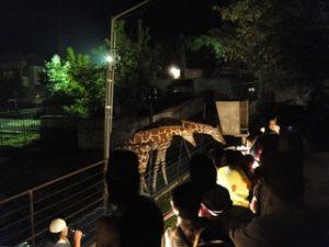 旭川市旭山動物園 夜の動物園