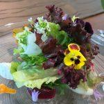 アグリスケープの新鮮野菜