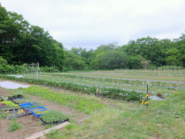 自家農園の畑