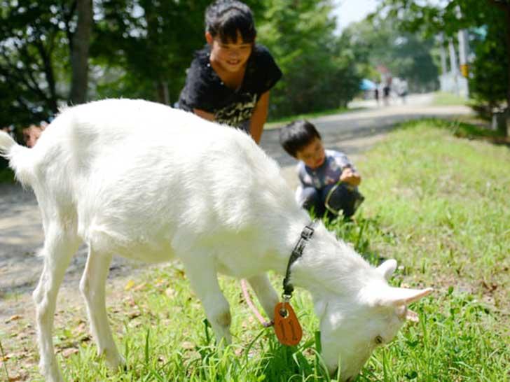 ハイジ牧場で子供たちがヤギと戯れる写真