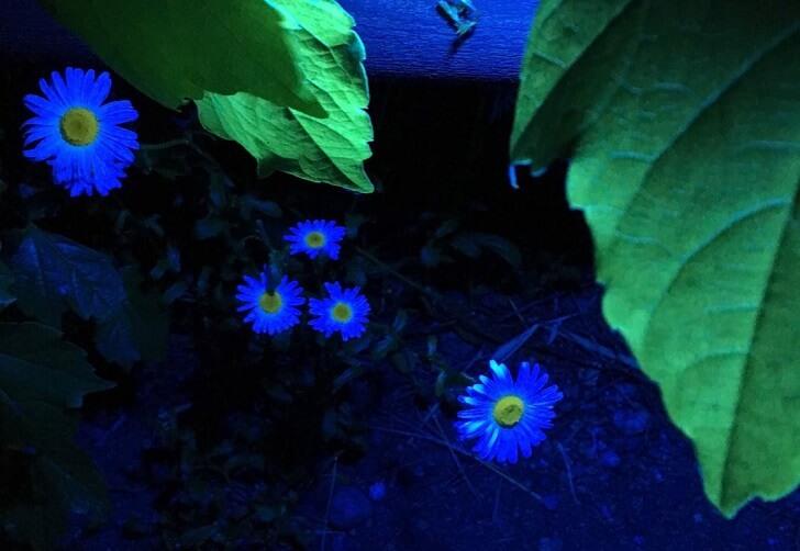 ライトアップされたお花