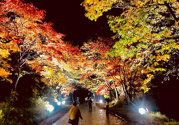 奇跡のイルミネートでライトアップされる紅葉