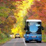 紅葉の中を走る定山渓紅葉かっぱバス