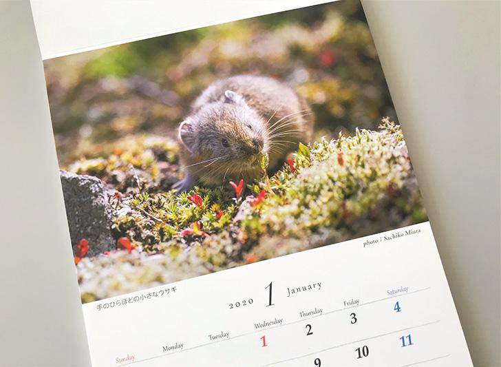 ナキウサギのカレンダー