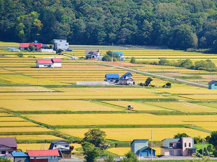 芦別市の田園風景