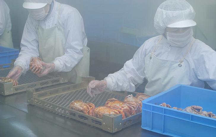 高圧スチーム後、急速冷凍して出荷される活蒸し毛蟹製造の様子