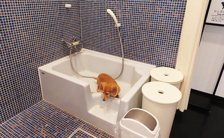 犬用シャワー